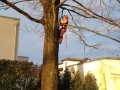 Baufällung, Baum fällen, Rodung, Baumfällungen
